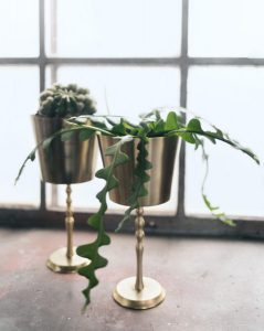 plantholder